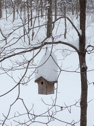 Bird house snow IMG_0584