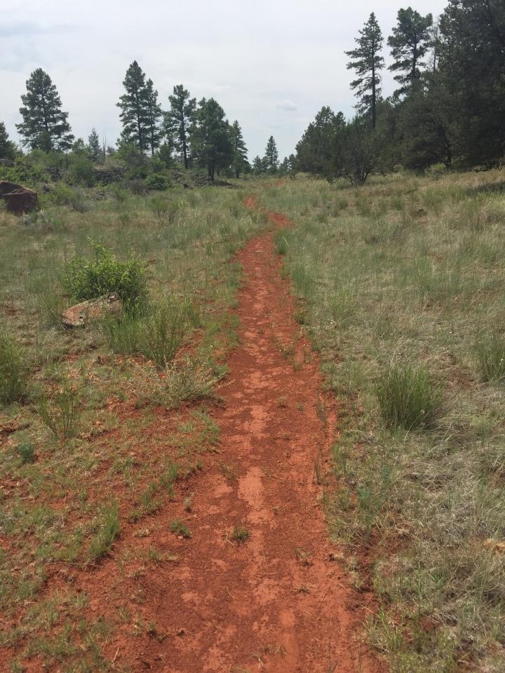 Trail IMG_2588