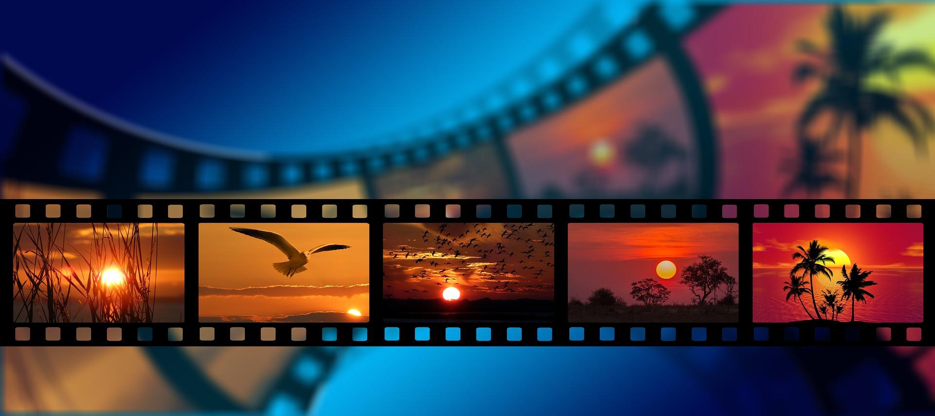 conservation film amy mathews amos